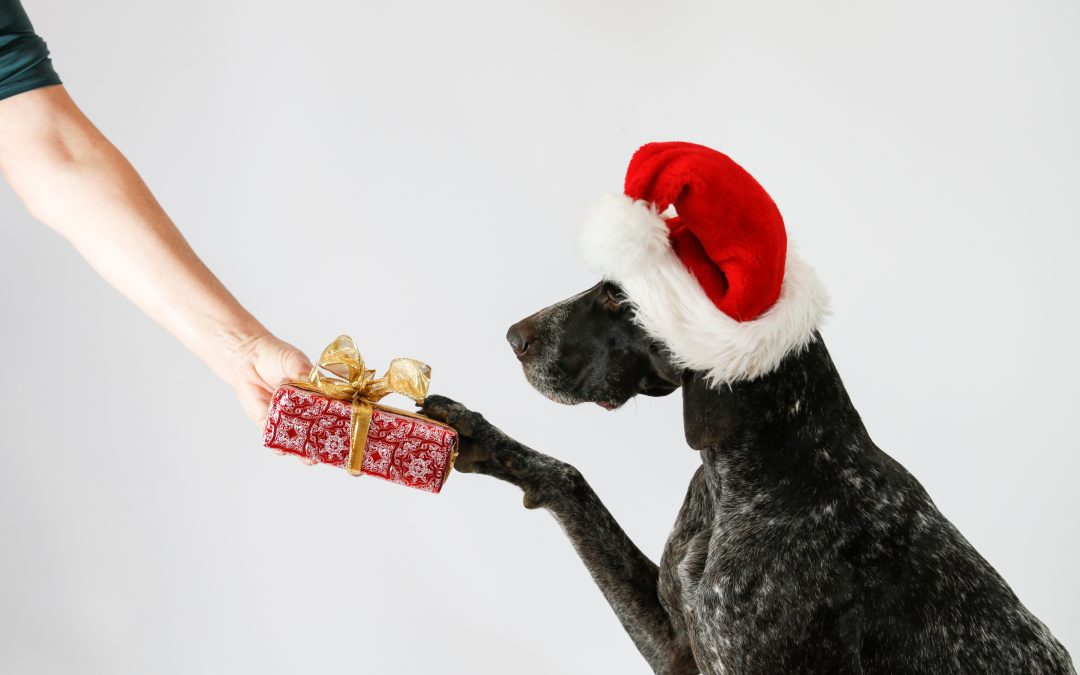 Cute Dog Santa getting gift