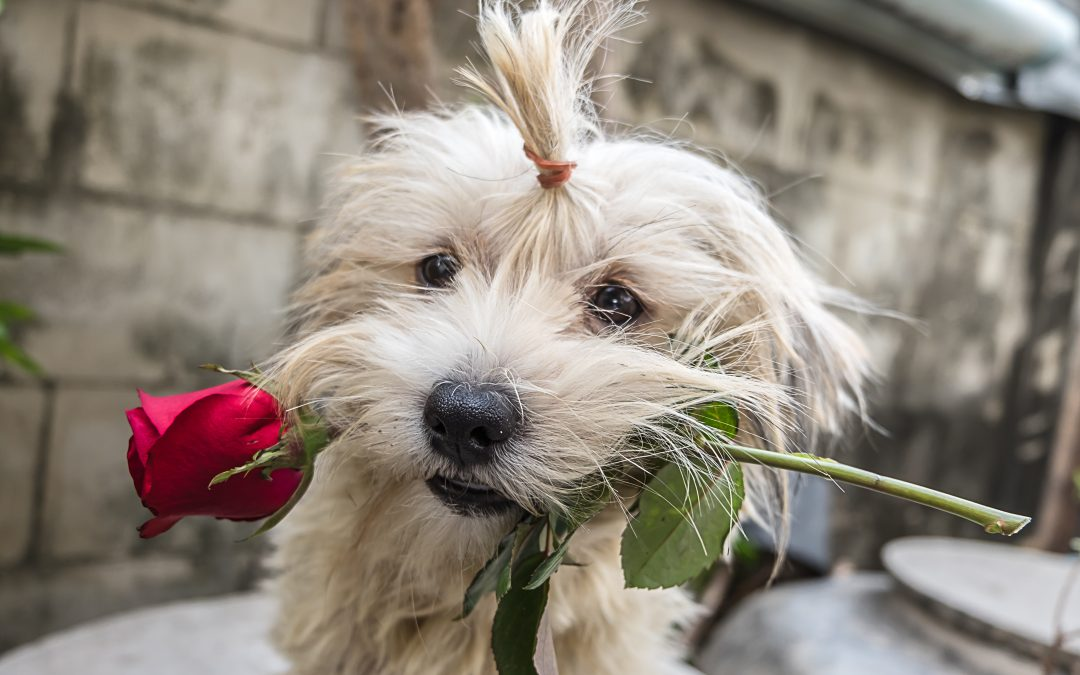 puppy holding rose Valentine's Day digital marketing